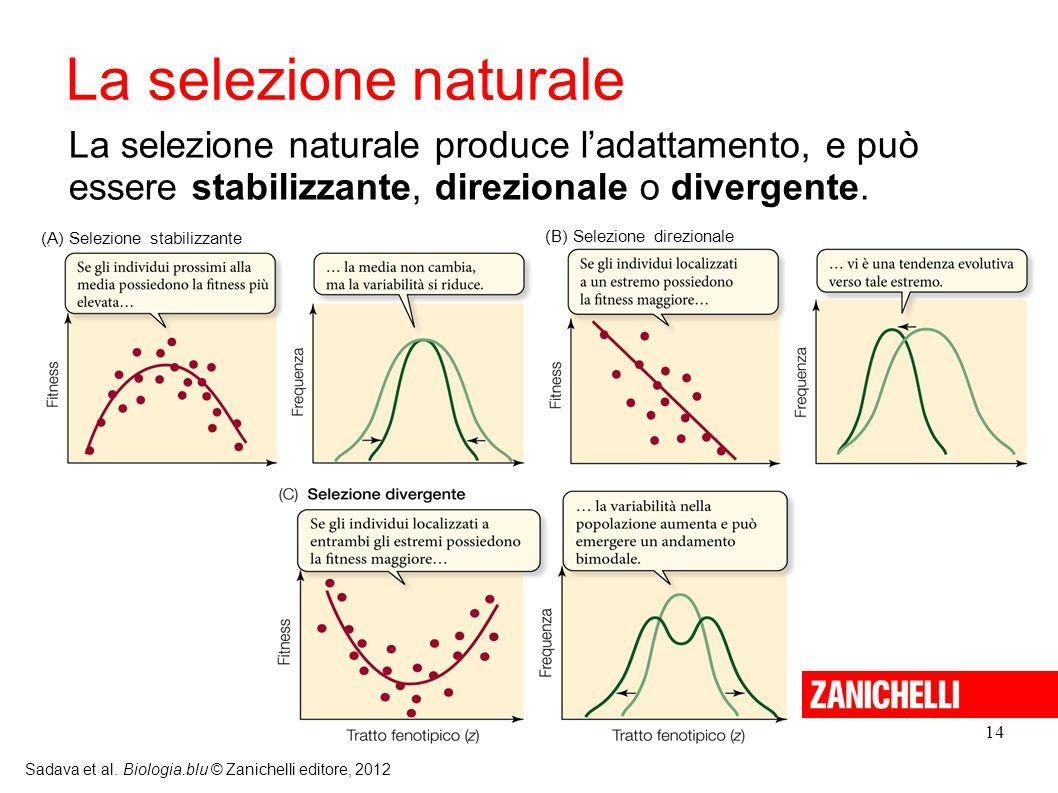 14 Sadava et al. Biologia.blu © Zanichelli editore, 2012 La selezione naturale produce ladattamento, e può essere stabilizzante, direzionale o diverge
