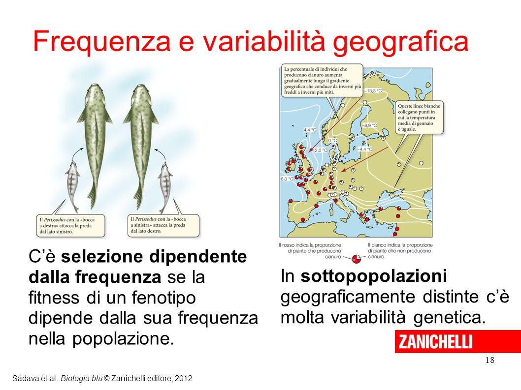 18 Sadava et al. Biologia.blu © Zanichelli editore, 2012 Cè selezione dipendente dalla frequenza se la fitness di un fenotipo dipende dalla sua freque