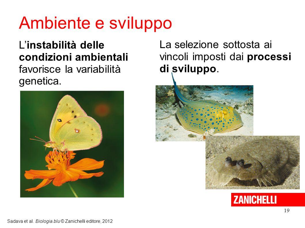 19 Sadava et al. Biologia.blu © Zanichelli editore, 2012 Linstabilità delle condizioni ambientali favorisce la variabilità genetica. La selezione sott