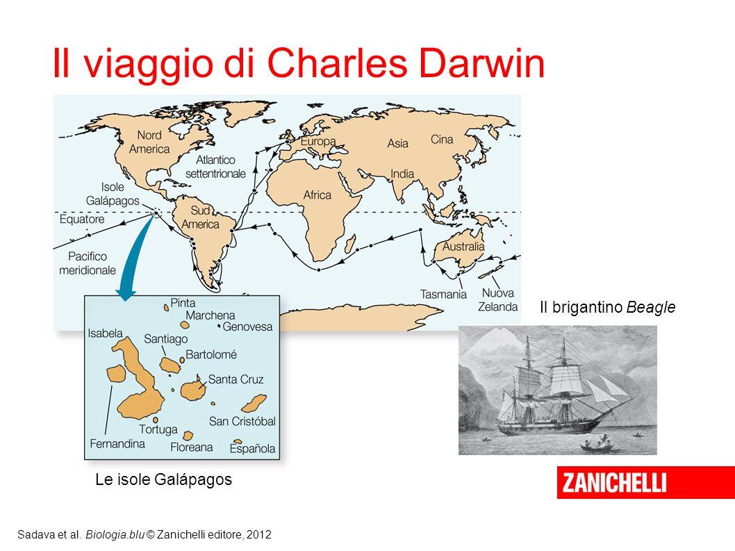 Sadava et al. Biologia.blu © Zanichelli editore, 2012 Le isole Galápagos Il brigantino Beagle Il viaggio di Charles Darwin