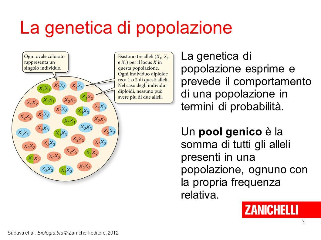 5 Sadava et al. Biologia.blu © Zanichelli editore, 2012 La genetica di popolazione esprime e prevede il comportamento di una popolazione in termini di