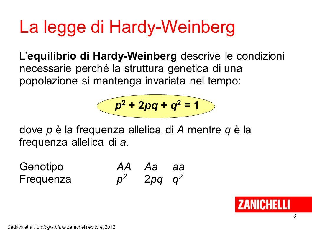 6 Sadava et al. Biologia.blu © Zanichelli editore, 2012 La legge di Hardy-Weinberg Lequilibrio di Hardy-Weinberg descrive le condizioni necessarie per