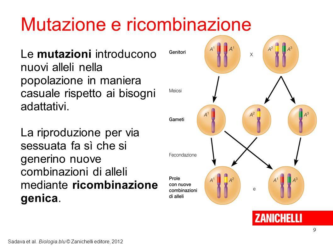 9 Sadava et al. Biologia.blu © Zanichelli editore, 2012 Le mutazioni introducono nuovi alleli nella popolazione in maniera casuale rispetto ai bisogni