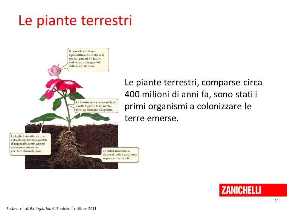 Le piante terrestri 11 Sadava et al. Biologia.blu © Zanichelli editore 2011 Le piante terrestri, comparse circa 400 milioni di anni fa, sono stati i p