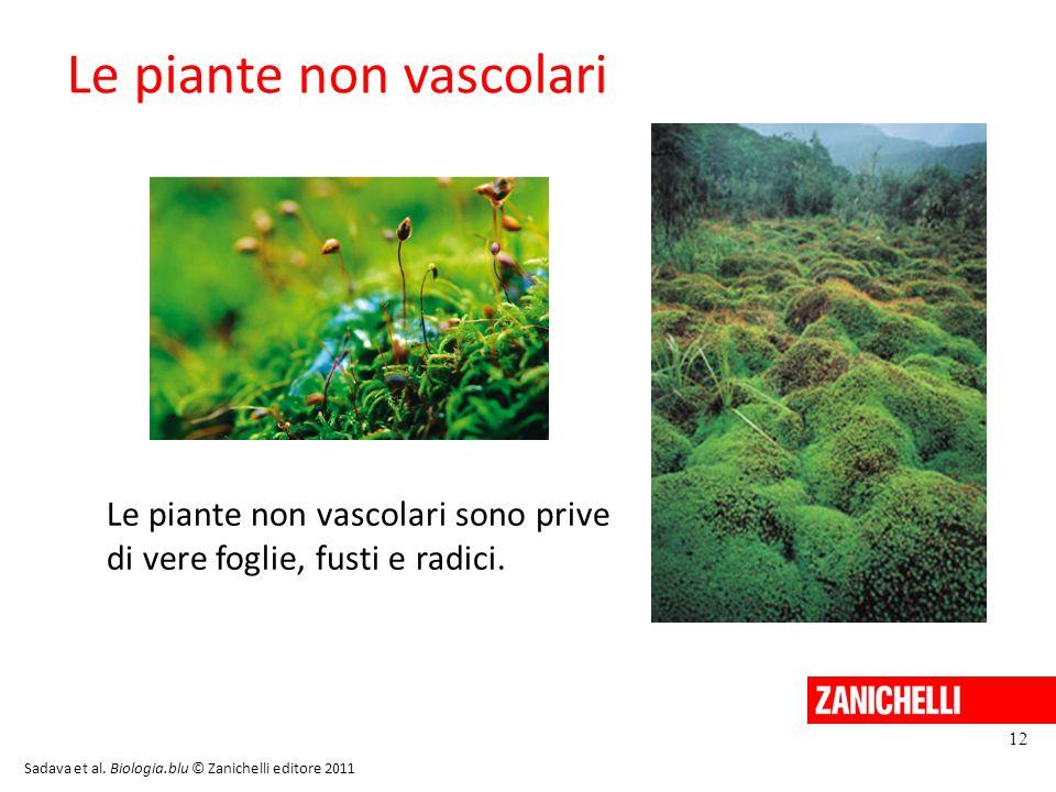 Le piante non vascolari 12 Sadava et al. Biologia.blu © Zanichelli editore 2011 Le piante non vascolari sono prive di vere foglie, fusti e radici.