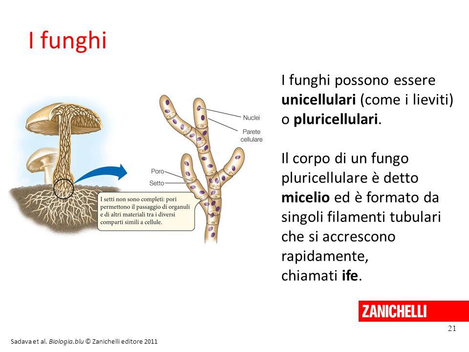 I funghi I funghi possono essere unicellulari (come i lieviti) o pluricellulari. Il corpo di un fungo pluricellulare è detto micelio ed è formato da s