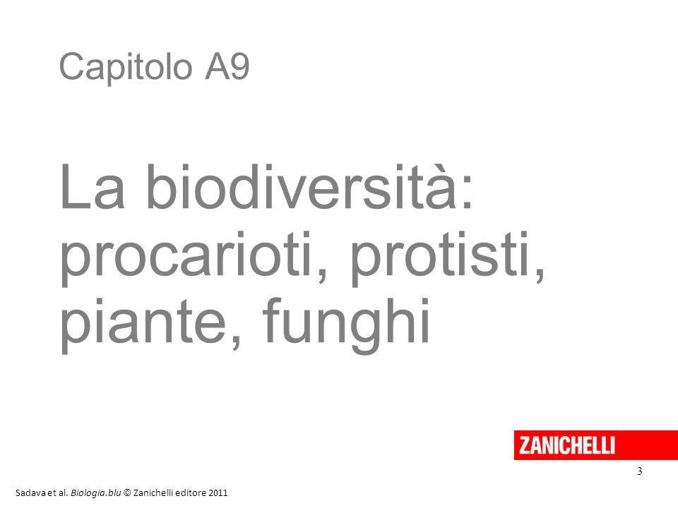 Capitolo A9 La biodiversità: procarioti, protisti, piante, funghi Sadava et al. Biologia.blu © Zanichelli editore 2011 3