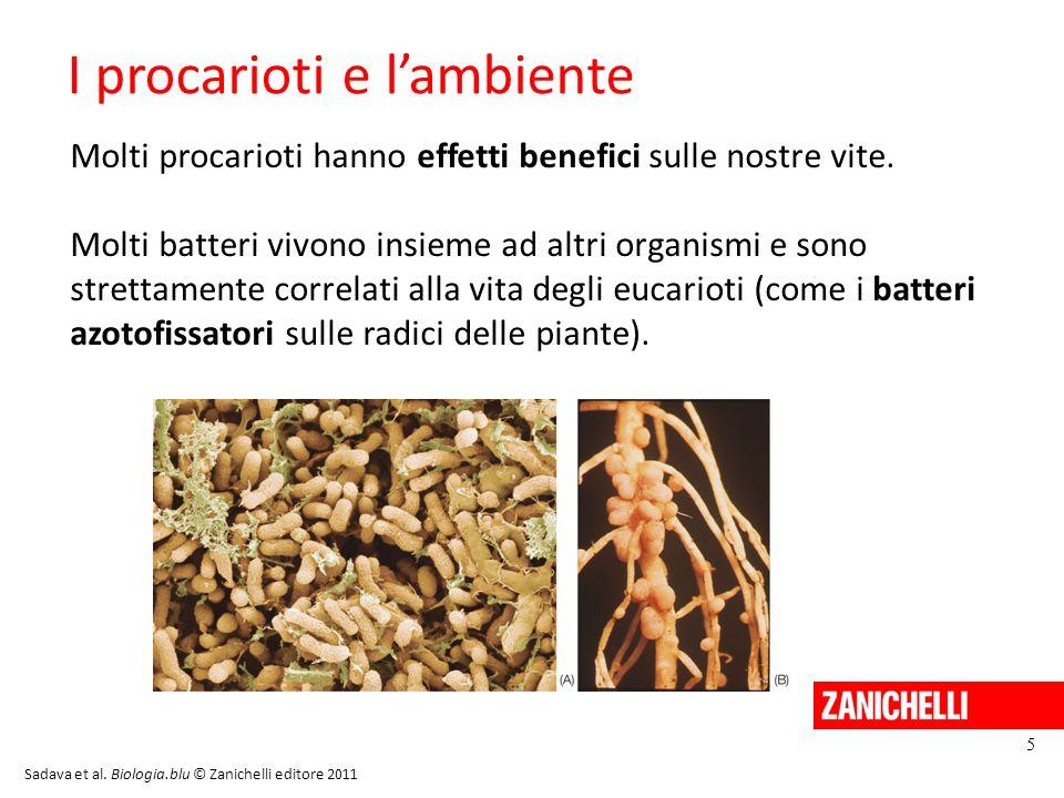 La varietà di batteri 6 Sadava et al. Biologia.blu © Zanichelli editore 2011