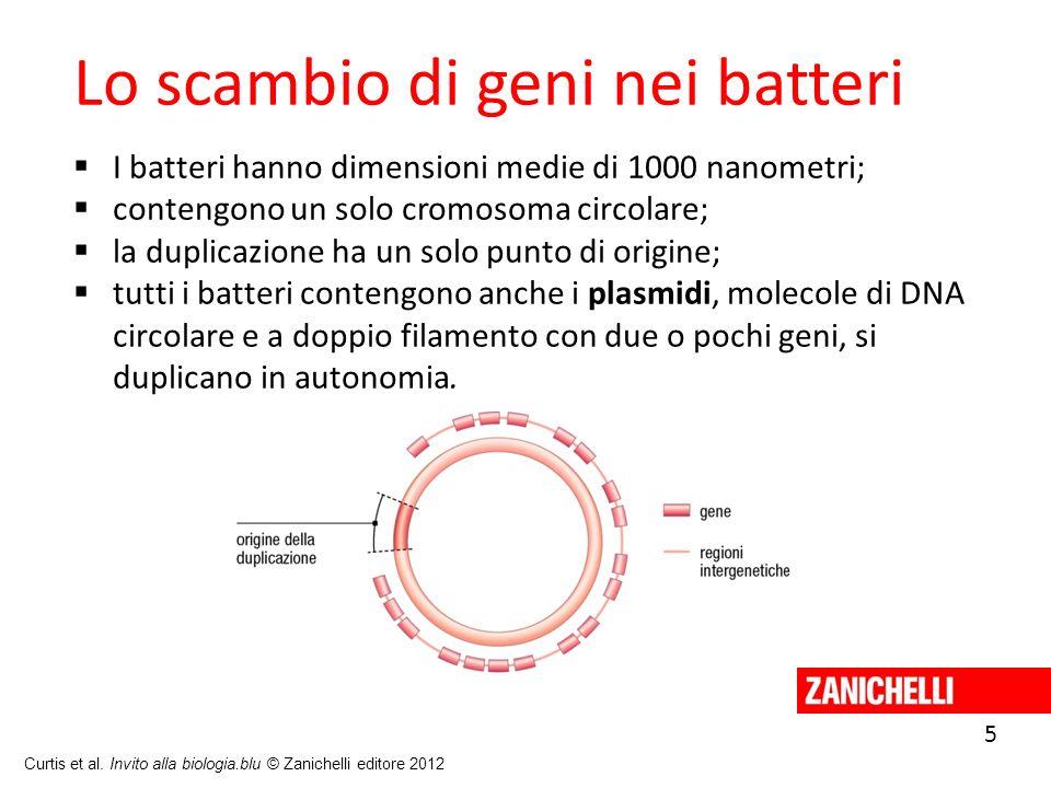 5 Curtis et al. Invito alla biologia.blu © Zanichelli editore 2012 Lo scambio di geni nei batteri I batteri hanno dimensioni medie di 1000 nanometri;