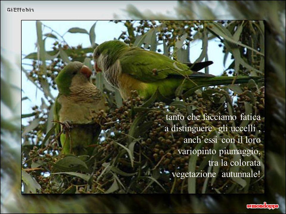 e una splendida passeggiata tra i boschi ci trasporta in un fantastico mondo di colori