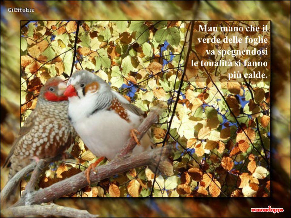 tanto che facciamo fatica a distinguere gli uccelli, anchessi con il loro variopinto piumaggio, tra la colorata vegetazione autunnale!