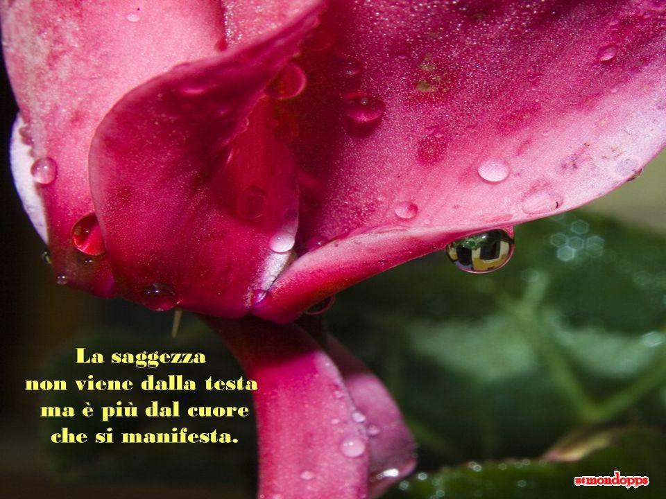 Lamicizia è il fiore di un momento e il frutto del tempo.