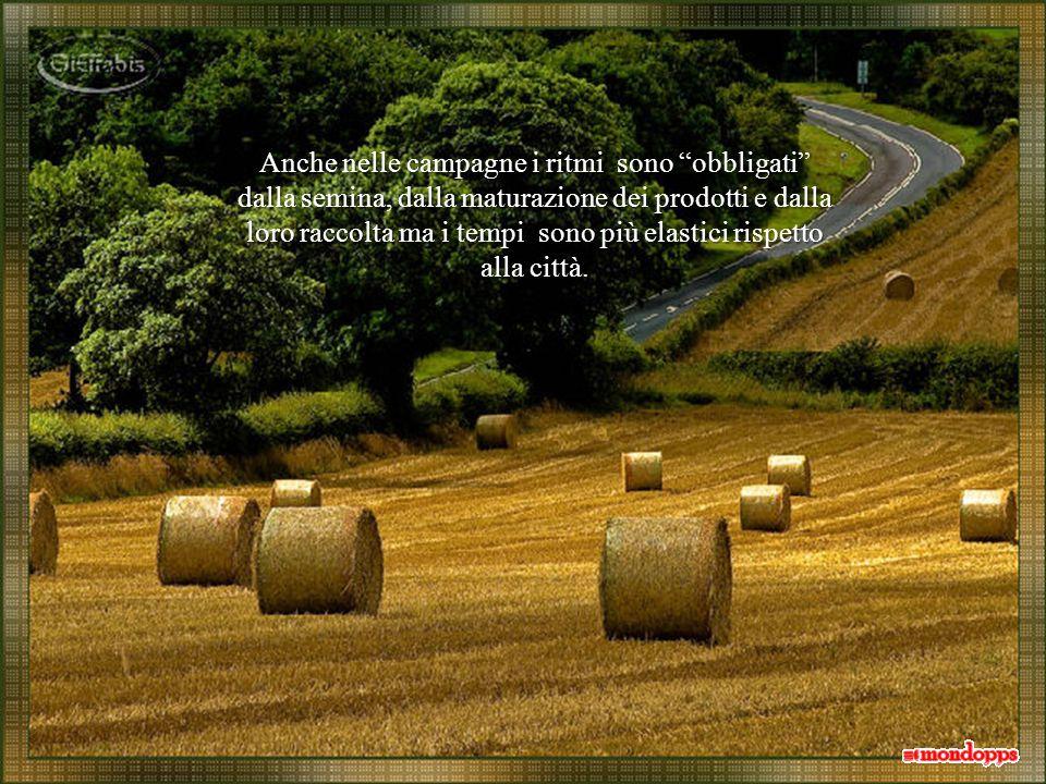 Anche nelle campagne i ritmi sono obbligati dalla semina, dalla maturazione dei prodotti e dalla loro raccolta ma i tempi sono più elastici rispetto alla città.