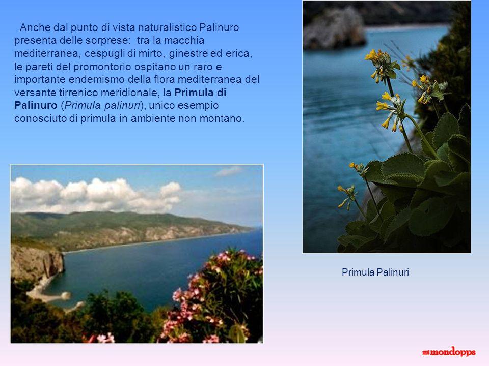 Il Porto Labitato di Palinuro visto dal porto Da molti anni Palinuro è collegata anche con un servizio di aliscafi.