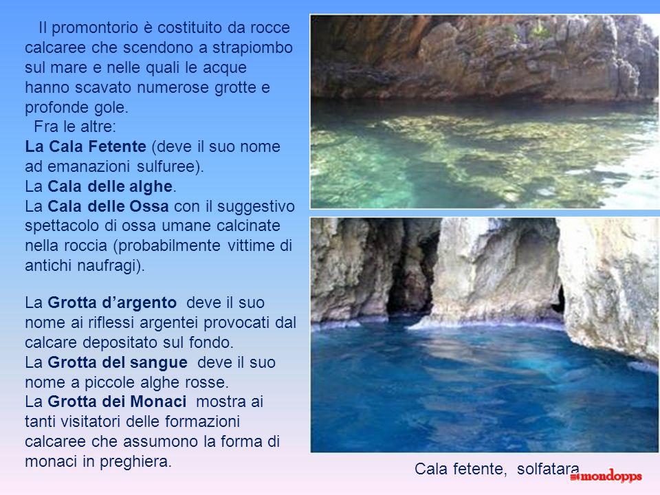 Altro motivo di attrazione turistica sono le numerose grotte marine site attorno Capo Palinuro (tra cui la Grotta Azzurra), apprezzate per le escursio