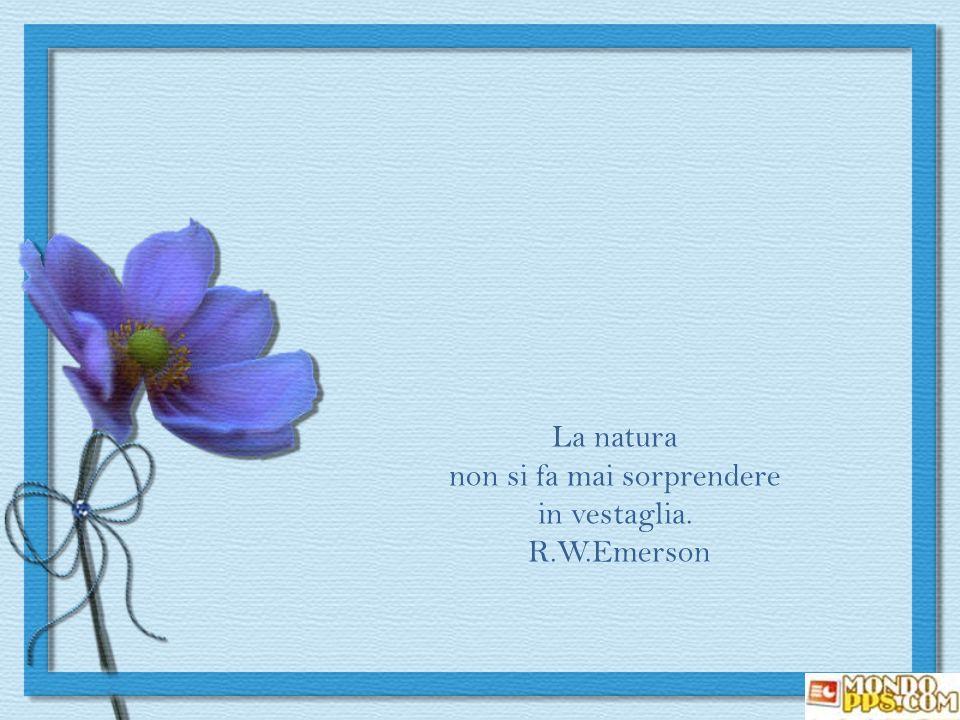 La natura non si fa mai sorprendere in vestaglia. R.W.Emerson