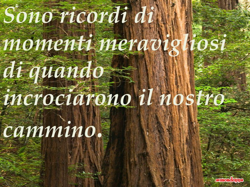 Ma quello che ci lascia felici è che le foglie che sono cadute continuano a vivere con noi, alimentando le nostre radici con allegria.