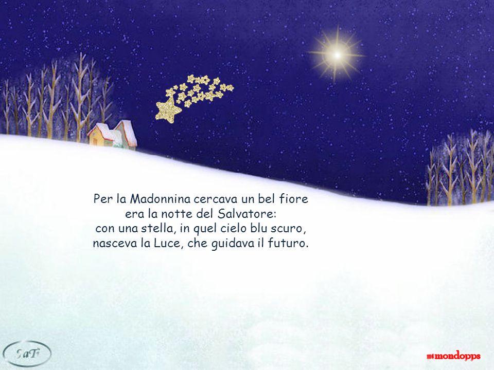 Per la Madonnina cercava un bel fiore era la notte del Salvatore: con una stella, in quel cielo blu scuro, nasceva la Luce, che guidava il futuro.