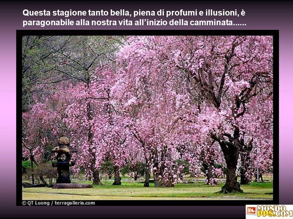 Questa stagione tanto bella, piena di profumi e illusioni, è paragonabile alla nostra vita allinizio della camminata......