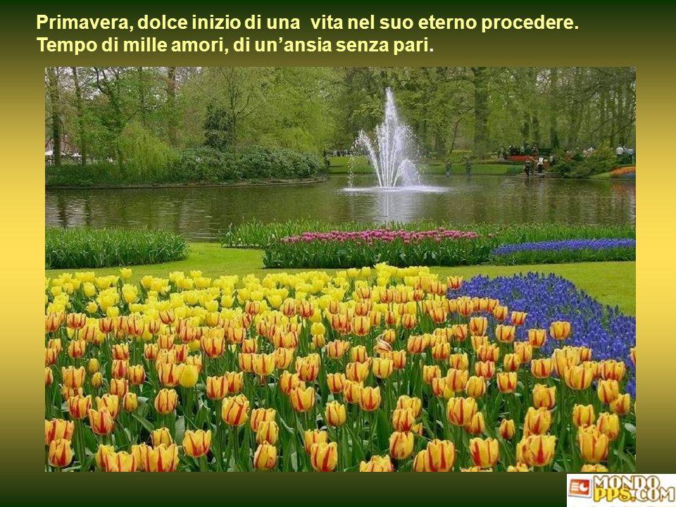 Primavera, dolce inizio di una vita nel suo eterno procedere.