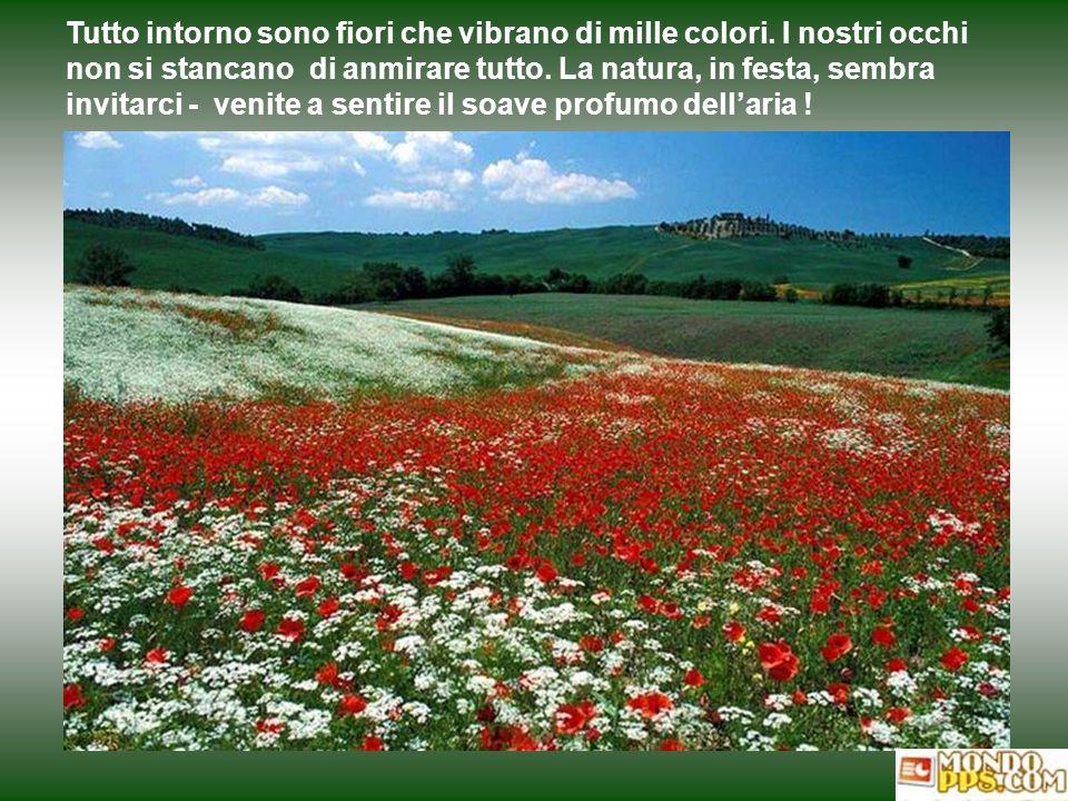 Tutto intorno sono fiori che vibrano di mille colori.