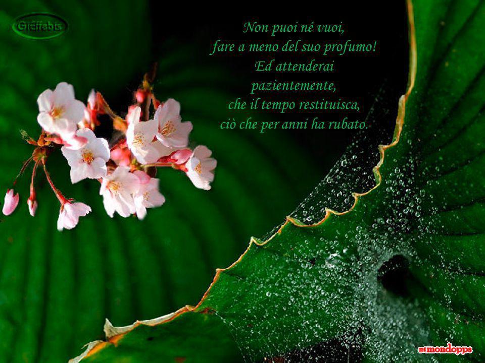 Le mani serrate a pugno sugli occhi, non servono ad asciugare le lacrime per quel fiore di vetro, troppo fragile e calpestato.