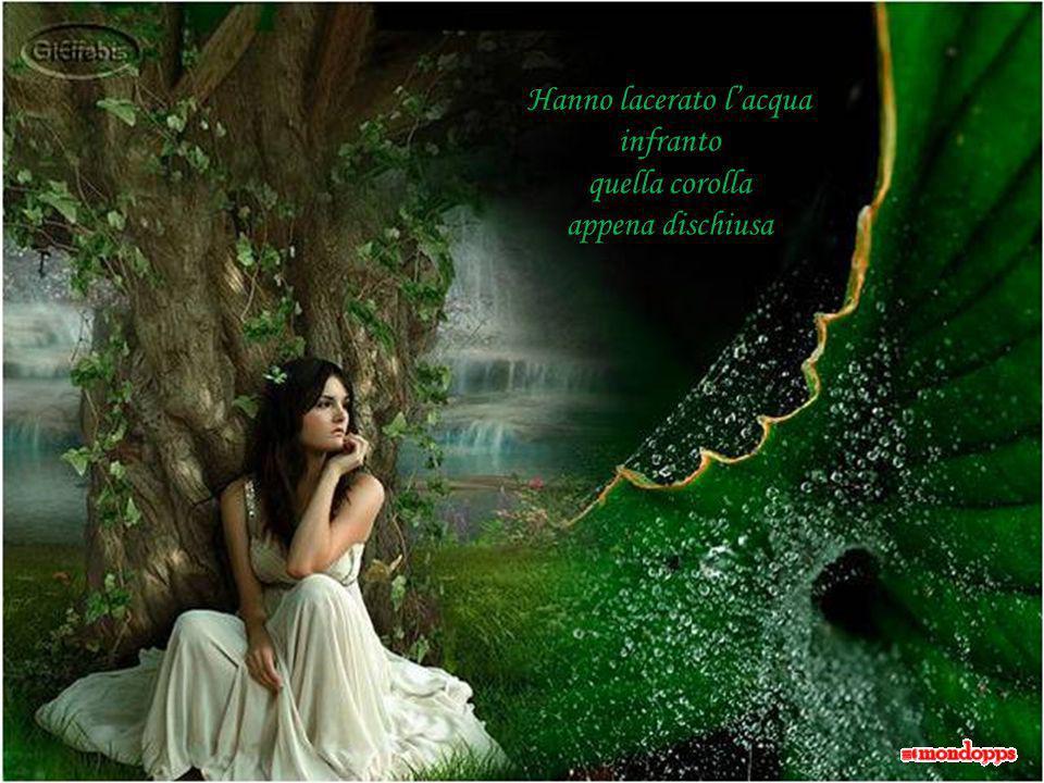 Un mormorio lontano le parole, le poesie … Troppo pesanti quei sassi lanciati nel vento.