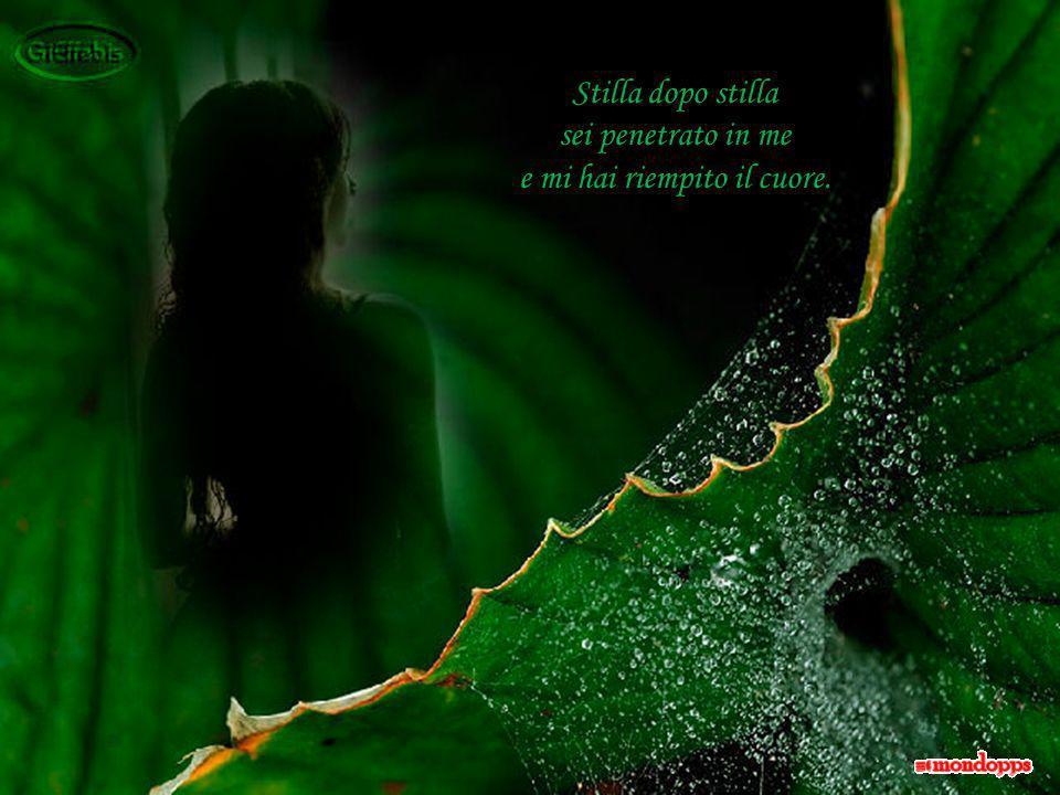 Sei tu, che come rugiada del mattino, goccia dopo goccia, sei sceso sul mio volto, sulle mie labbra …
