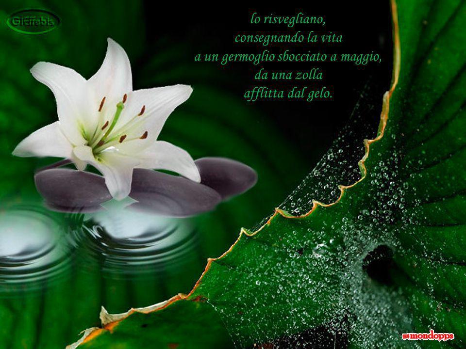 … e tu piccolo fiore di cristallo, ora che lo hai trovato in te, non disperderlo!