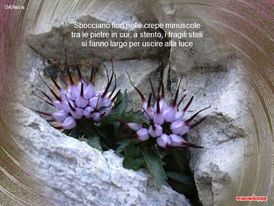 Che questi fiori di Maggio, festosi come un bouquet di sposa, siano per tutti auspicio di vita serena e nuova, per tutto ciò che il vostro cuore desidera.