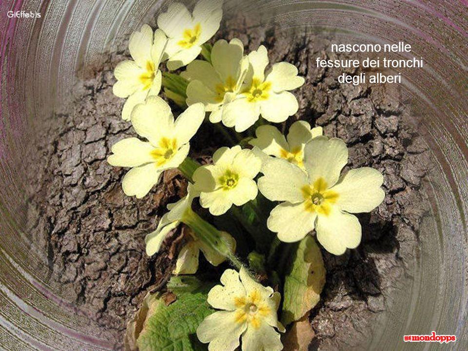 Sbocciano fiori nelle crepe minuscole tra le pietre in cui, a stento, i fragili steli si fanno largo per uscire alla luce