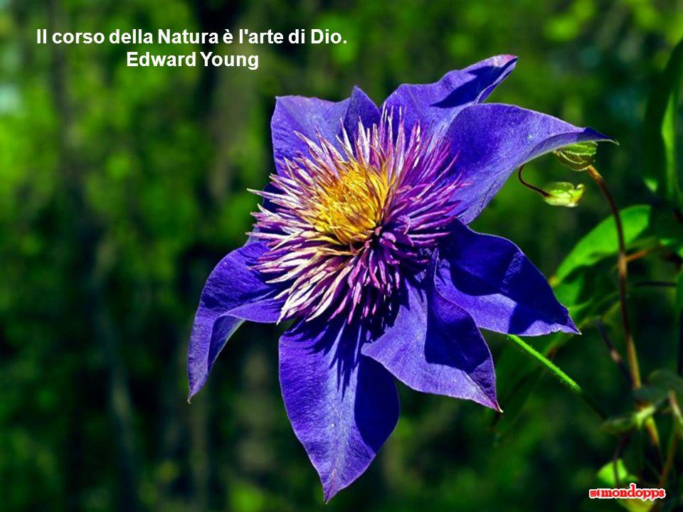 L'amore è un'erba spontanea, non una pianta da giardino. Ippolito Nievo