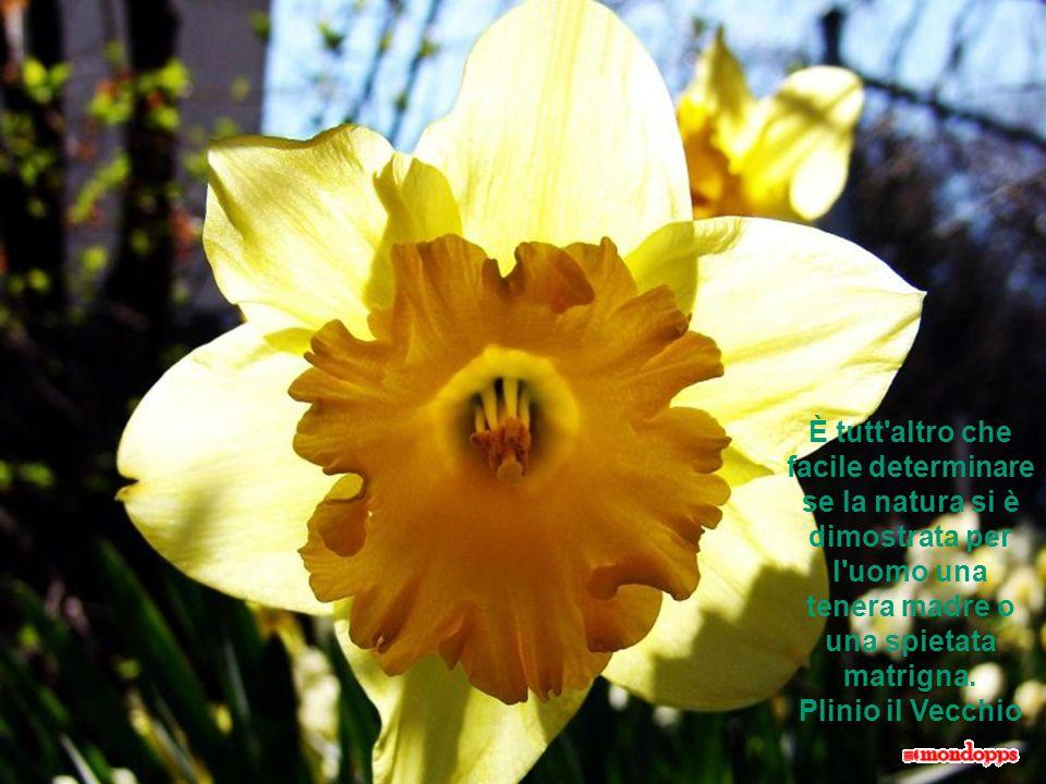 Nelluomo la pazienza è ciò che più somiglia al procedimento che la natura usa nelle sue creazioni. (Honoré de Balzac)