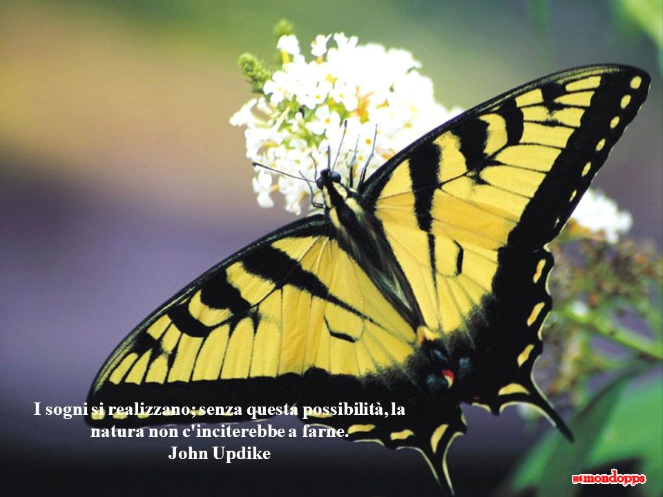 Nelluomo la pazienza è ciò che più somiglia al procedimento che la natura usa nelle sue creazioni.