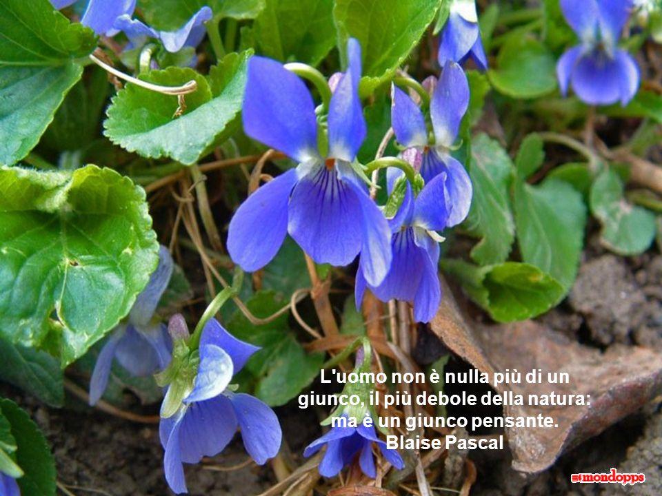 La natura ha delle perfezioni per dimostrare che essa è l'immagine di Dio e ha dei difetti per mostrare che ne è solo un'immagine. Blaise Pascal