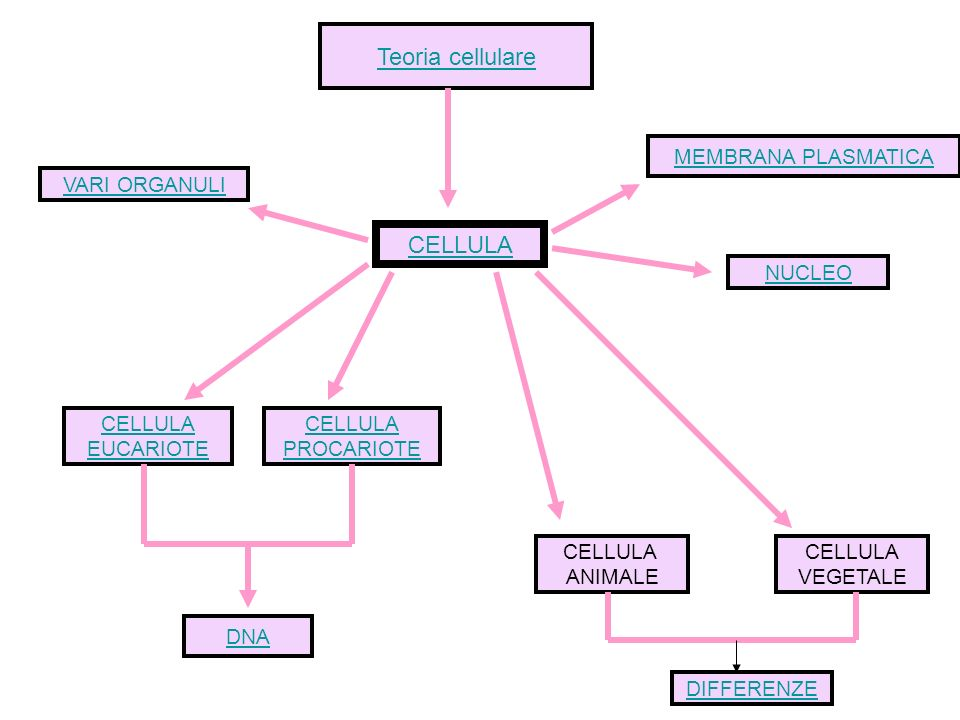 Teoria cellulare CELLULA MEMBRANA PLASMATICA NUCLEO VARI ORGANULI CELLULA EUCARIOTE CELLULA PROCARIOTE CELLULA ANIMALE CELLULA VEGETALE DNA DIFFERENZE
