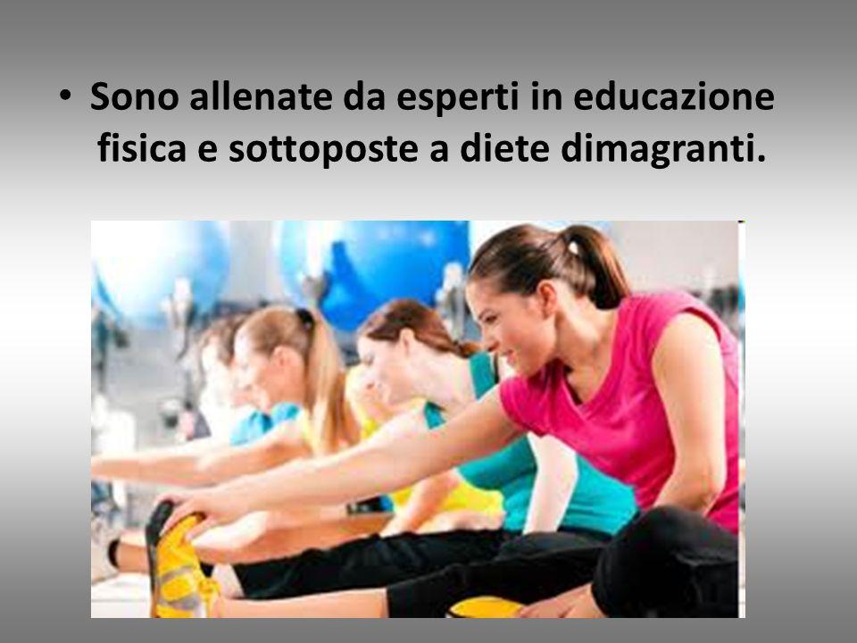 Sono allenate da esperti in educazione fisica e sottoposte a diete dimagranti. http://