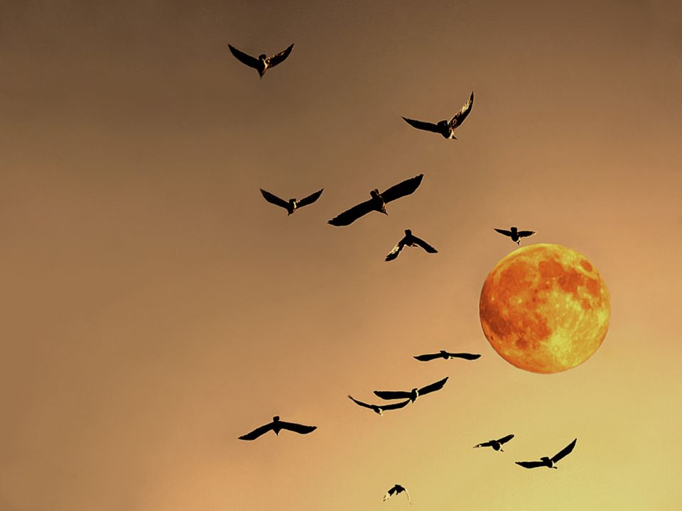 La luna...silenziosa..... nella luce della notte protegge l'incanto dei colori dell'amore.... Francis Goya