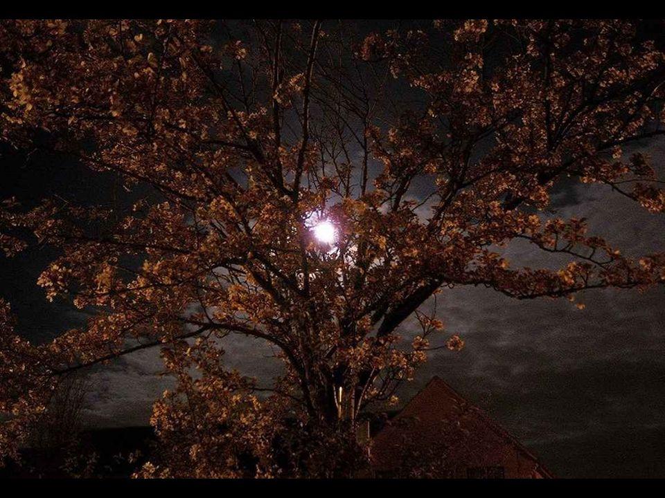 Quando la luna è alta i desideri diventano sogni... Teneteli stretti fino al mattino perché si avverino Lisa