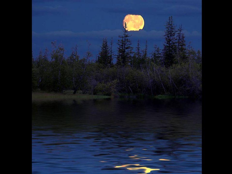 Tra i pini scuri si srotola il vento. Brilla fosforescente la luna su acque erranti. Passano giorni uguali, inseguendosi l'un l'altro. Si dirada la ne