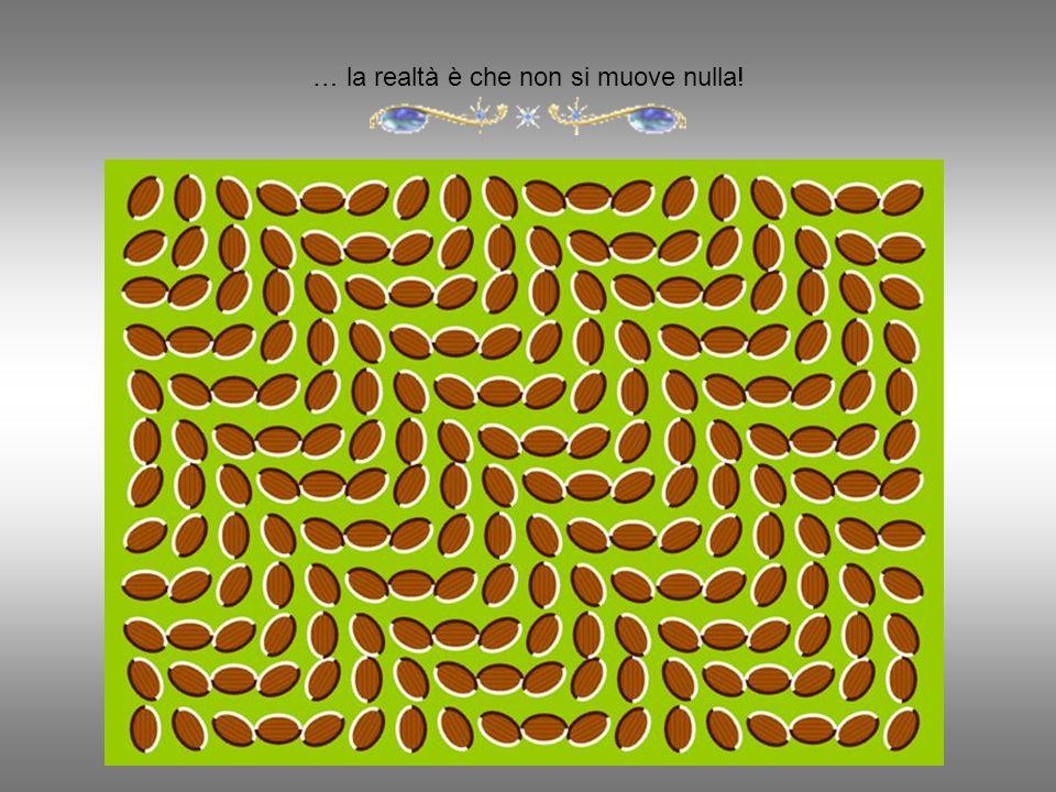 E la migliore illusione ottica.....
