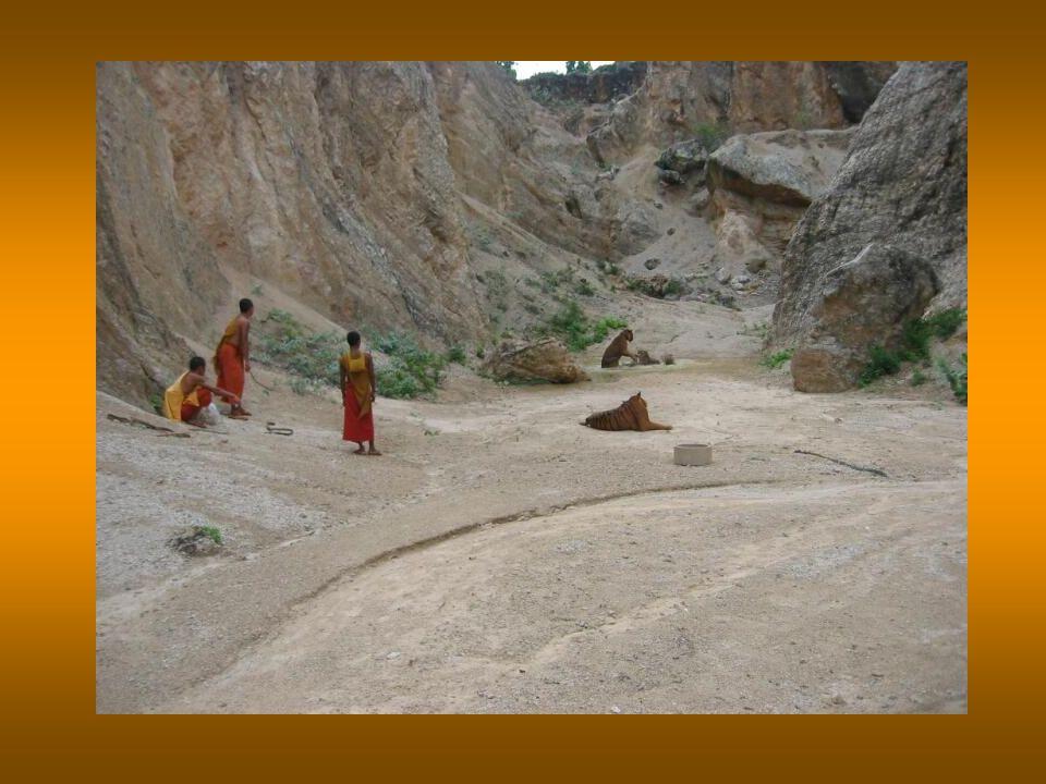 Questo luogo è considerato un santuario per gli animali e un centro per preservarne lestinzione