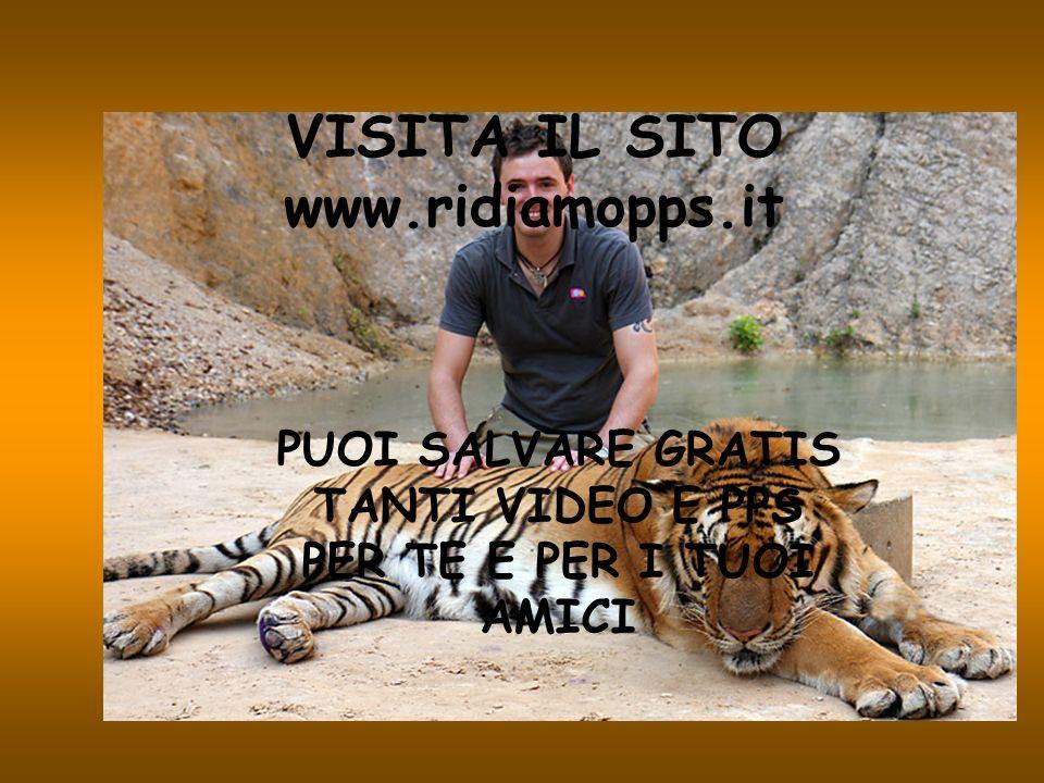 E lunico luogo al mondo dove è possibile accarezzare delle tigri in libertà