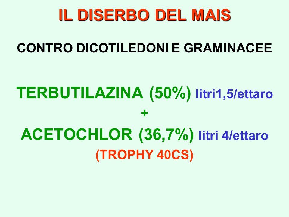 IL DISERBO DEL MAIS CONTRO DICOTILEDONI E GRAMINACEE TERBUTILAZINA (50%) litri1,5/ettaro + ACETOCHLOR (36,7%) litri 4/ettaro (TROPHY 40CS)