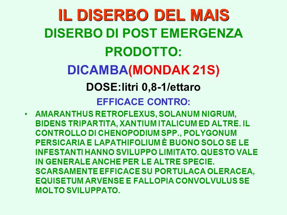 IL DISERBO DEL MAIS DISERBO DI POST EMERGENZA PRODOTTO: DICAMBA(MONDAK 21S) DOSE:litri 0,8-1/ettaro EFFICACE CONTRO: AMARANTHUS RETROFLEXUS, SOLANUM N