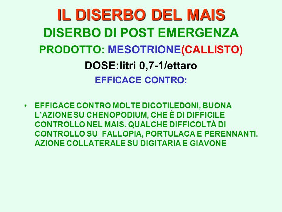 IL DISERBO DEL MAIS DISERBO DI POST EMERGENZA PRODOTTO: MESOTRIONE(CALLISTO) DOSE:litri 0,7-1/ettaro EFFICACE CONTRO: EFFICACE CONTRO MOLTE DICOTILEDO