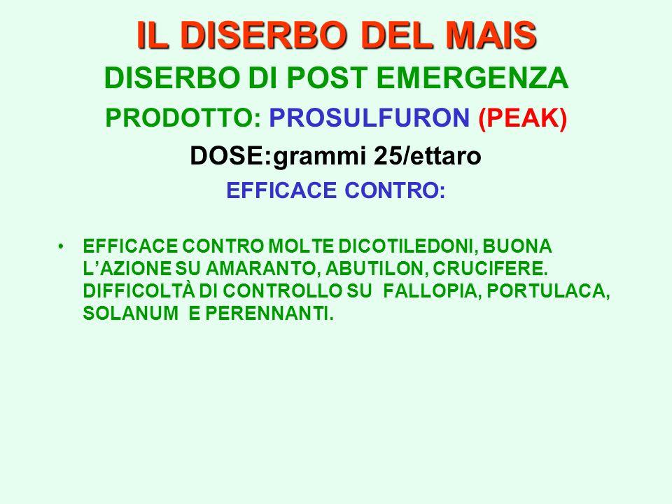 IL DISERBO DEL MAIS DISERBO DI POST EMERGENZA PRODOTTO: PROSULFURON (PEAK) DOSE:grammi 25/ettaro EFFICACE CONTRO: EFFICACE CONTRO MOLTE DICOTILEDONI,