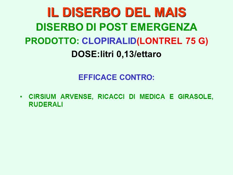 IL DISERBO DEL MAIS DISERBO DI POST EMERGENZA PRODOTTO: CLOPIRALID(LONTREL 75 G) DOSE:litri 0,13/ettaro EFFICACE CONTRO: CIRSIUM ARVENSE, RICACCI DI M