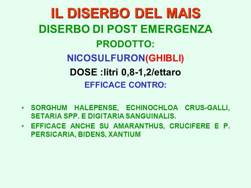 IL DISERBO DEL MAIS DISERBO DI POST EMERGENZA PRODOTTO: NICOSULFURON(GHIBLI) DOSE :litri 0,8-1,2/ettaro EFFICACE CONTRO: SORGHUM HALEPENSE, ECHINOCHLO