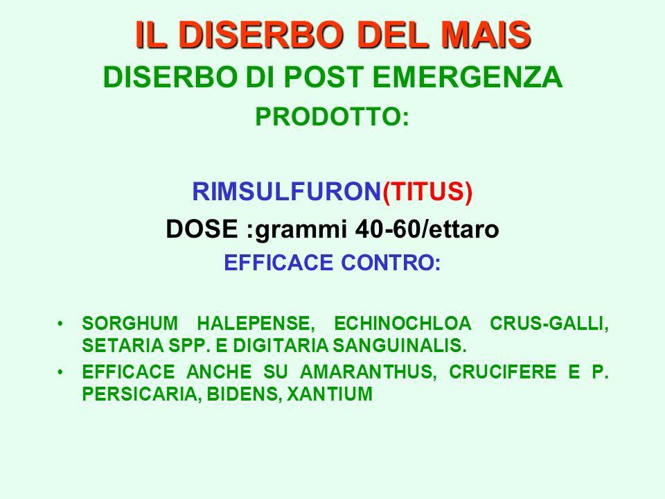 IL DISERBO DEL MAIS DISERBO DI POST EMERGENZA PRODOTTO: RIMSULFURON(TITUS) DOSE :grammi 40-60/ettaro EFFICACE CONTRO: SORGHUM HALEPENSE, ECHINOCHLOA C